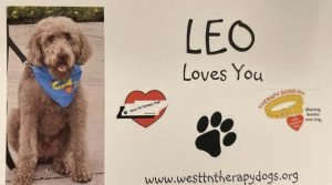 Leo the Labradoodle