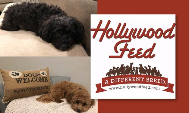 Hollywood Pet Stars: Rudy and Izzy