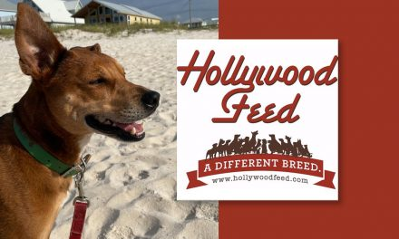 Hollywood Pet Stars: Picking the Perfect Family